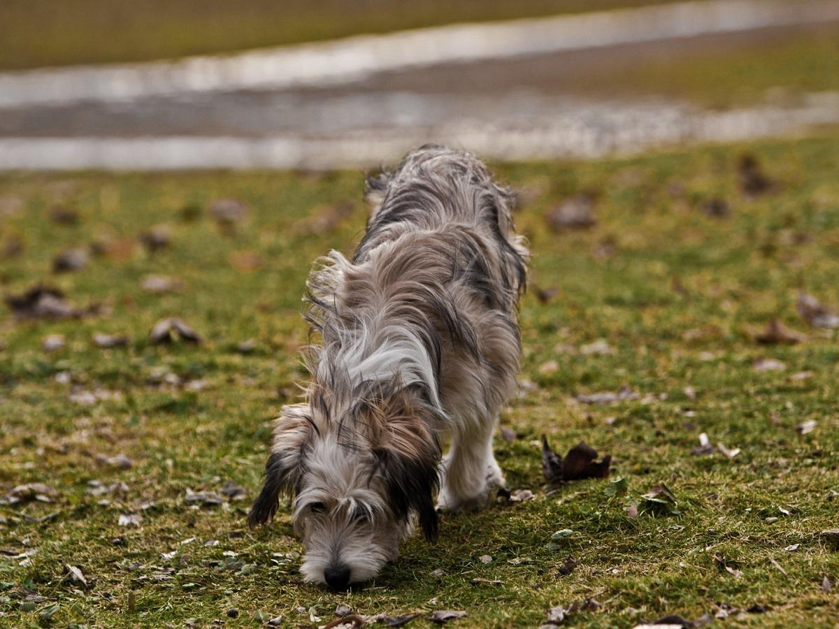 Durchfall beim Hund Ursachen - Behandlungsmöglichkeiten