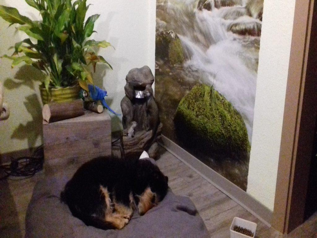 Startseite Der Pfoten Freund. Frieda beim schlafen auf ihrer Kuscheldecke vor Wasserfall