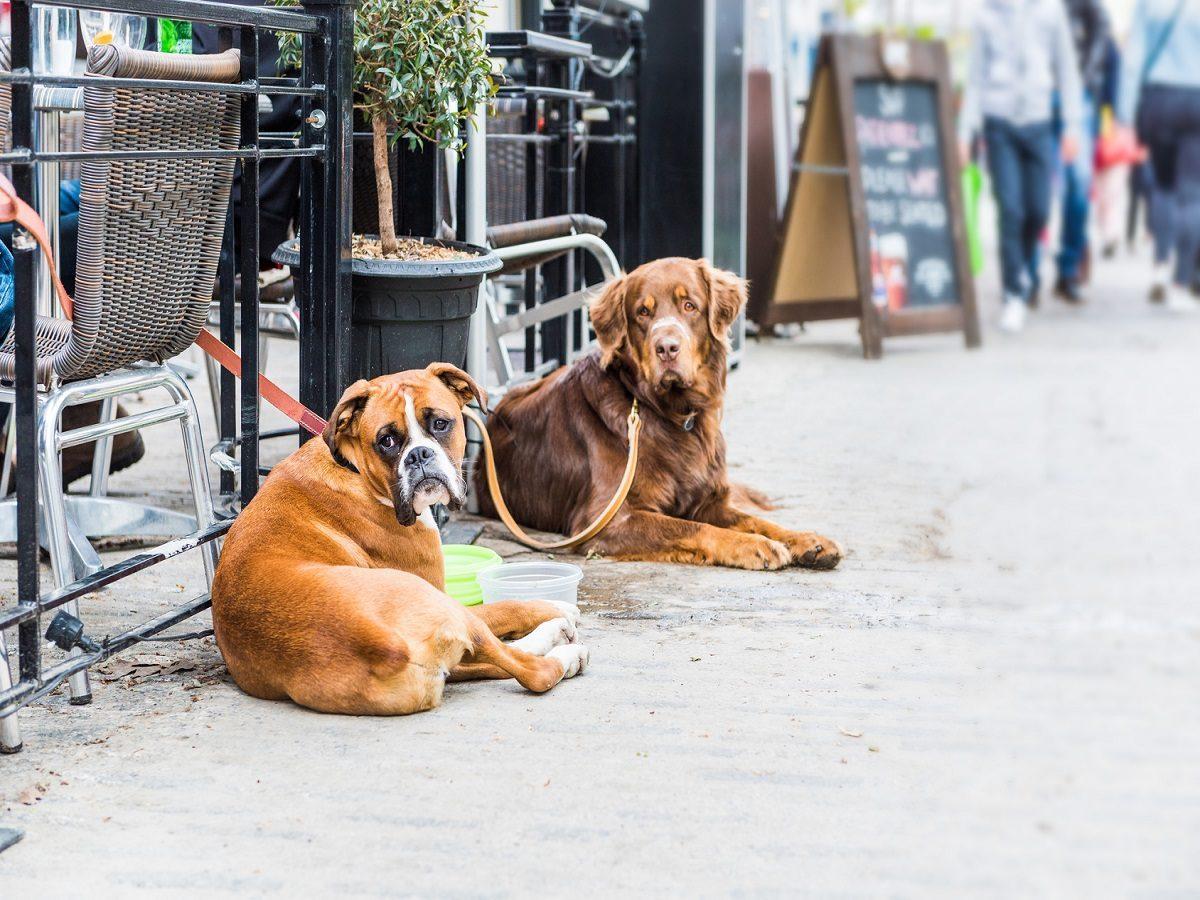 Begleithundeprüfung. 2 angeleinte Hunde vor Restaurant