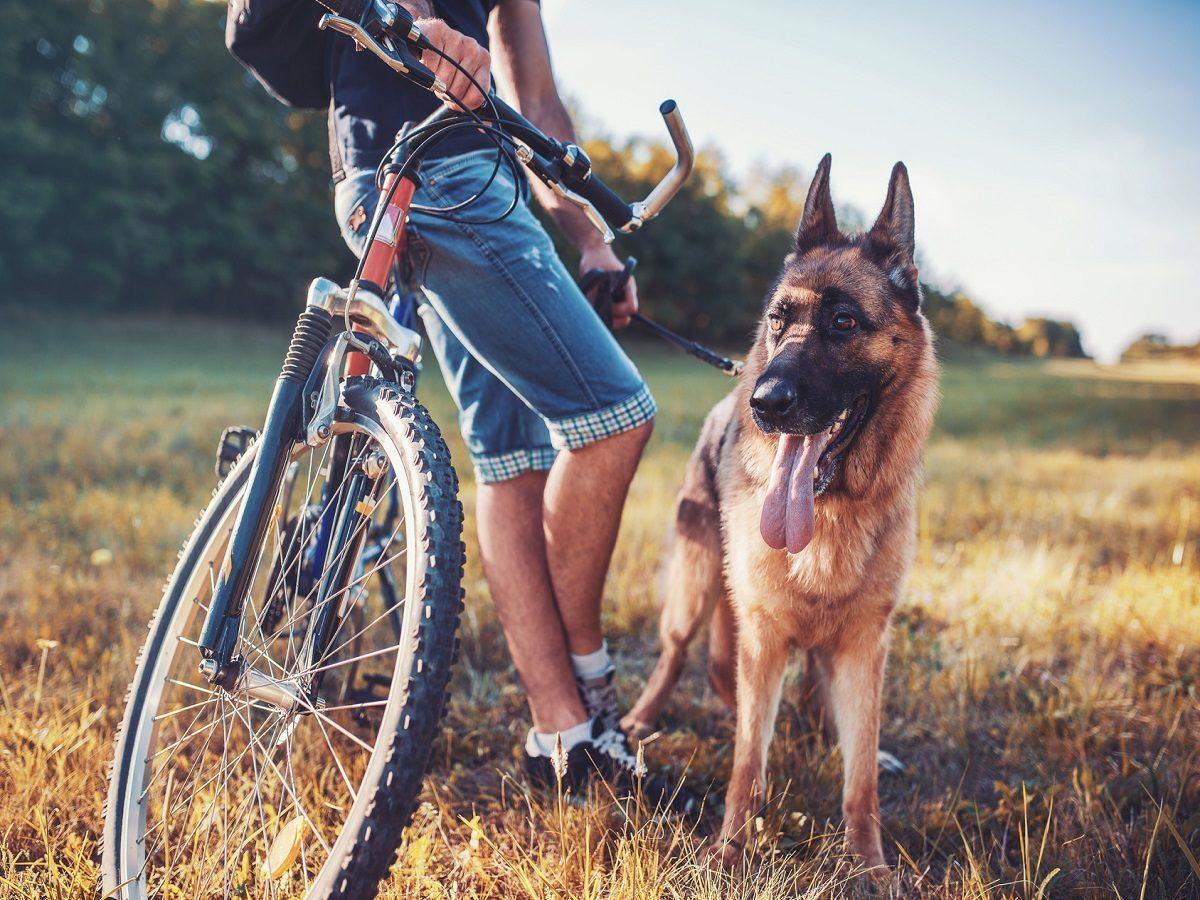 Fahrrad fahren mit Hund. Junger Mann lehnt an Fahrrad mit Hund an Leine