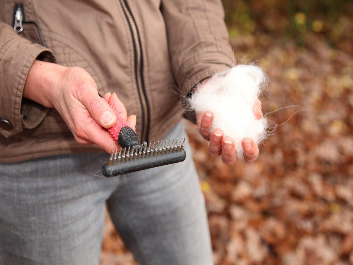 Haarausfall beim Hund. Frau mit Hundebürste und Hundehaare in den Händen