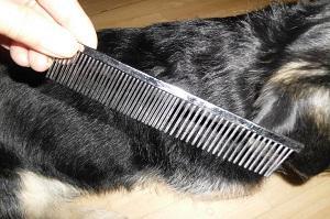 Richtige Hundepflege. Hundekamm