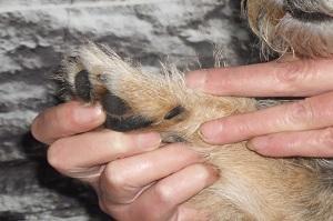 Richtige Hundepflege. Hundekralle Optimal