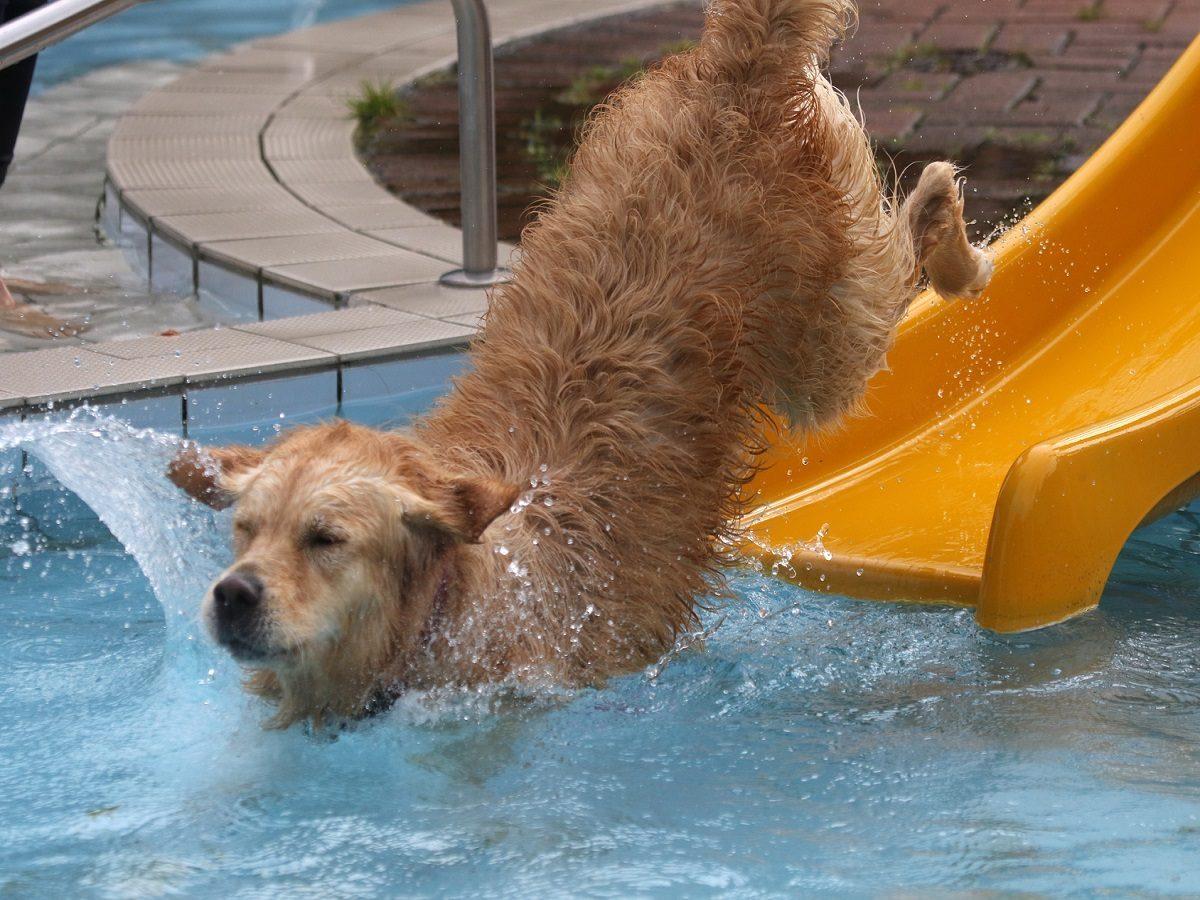 Hundeschwimmen. Hund auf Wasserrutsche