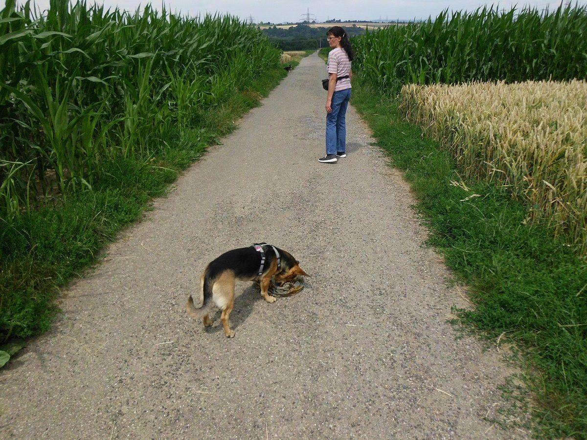 Spaziergang mit Hund interessant machen. Hund findet verlorenes Tuch